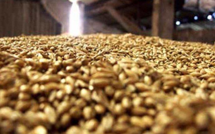 Фуражная пшеница по отличной цене