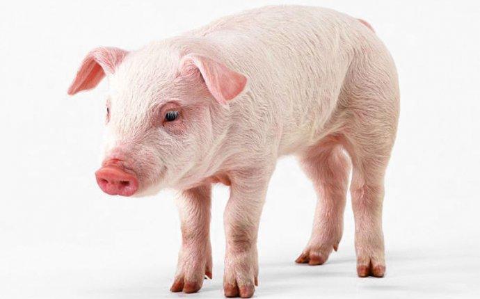 Комбикорм для свиней от компании АГРОНИТ (Самара) | Прайс-лист