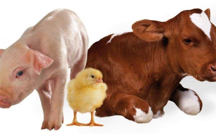 Корм для сельскохозяйственных животных и птицы - байпас по