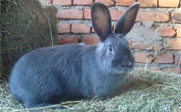 Кролики: содержание, разведение, породы - Страница 3 | Крупнейший