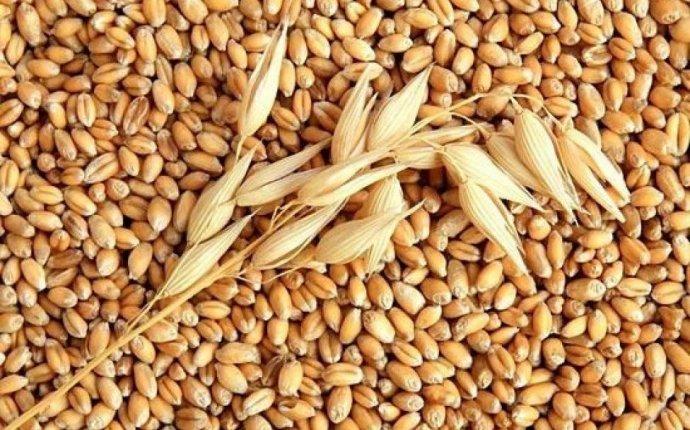 планирует увеличить поставки зерна в Японию