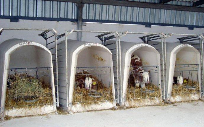 Силос для свиней в домашних условиях — Set-free.ru
